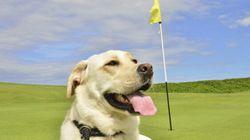 Jouer au golf... avec son