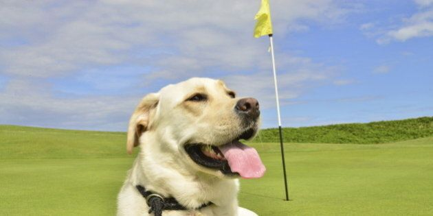 dog on golf