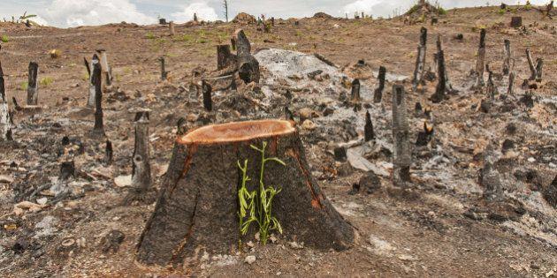 La déforestation de la planète se poursuit mais à un rythme