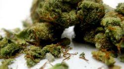 Marijuana: le choix de Blair inquiète les