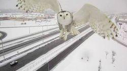 Cette caméra de surveillance de Montréal a capté un impressionnant
