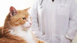 Soigner nos animaux grâce aux médecines
