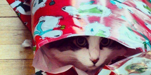 Une famille berlinoise retrouve le jour de Noël son chat disparu depuis sept