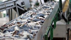 Produits marins: le revers de l'embauche de travailleurs