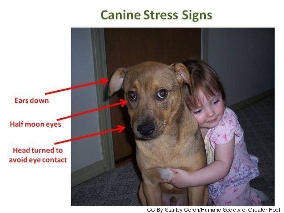 Vous aimez faire des câlins à votre chien? Lui peut-être