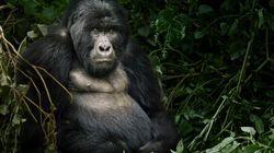 Journée de la Terre: 10 merveilles de la nature menacées