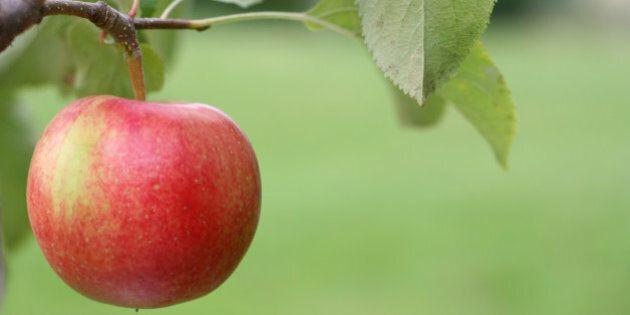 apple on a