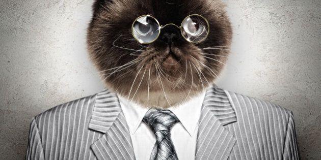 Élection municipale: un chat en tête des sondages dans une ville de