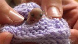 Le plus petit animal jamais soigné par ces