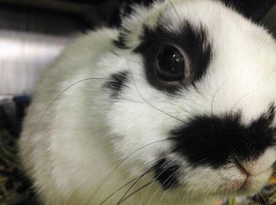 Un pas de plus vers les cosmétiques non testés sur les animaux au