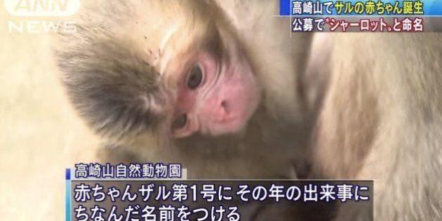 Donner le nom de la princesse Charlotte à un bébé singe? Ce zoo japonais doit déjà