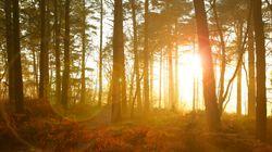 En Nouvelle-Écosse, la forêt