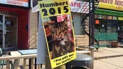 Humbert le chat fait campagne à