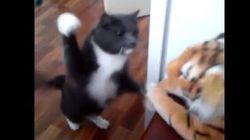 Ce chat en veut (beaucoup) à ce tigre