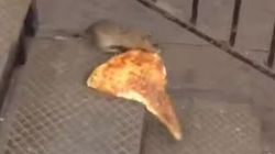 Ce rat est la nouvelle star de YouTube