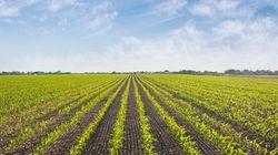 Ottawa envisage la réouverture des fermes