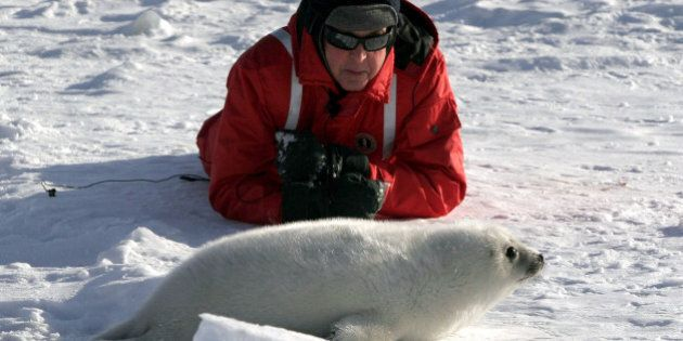 Paul McCartney visits with a newborn harp seal pup on the ice floes of the Gulf of St. Lawrence on Canada's...