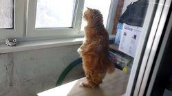 Ce chat sait se tenir debout comme un être
