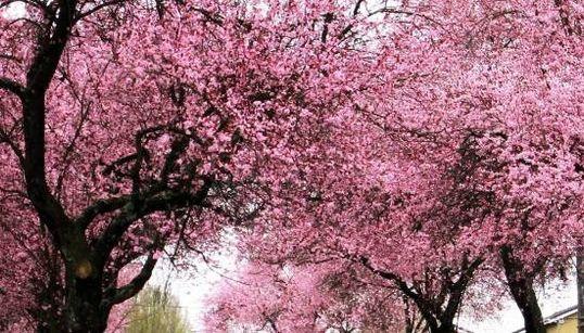 15 endroits magnifiques à visiter ce printemps au