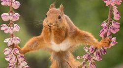 Cet écureuil est à la source d'une bataille de