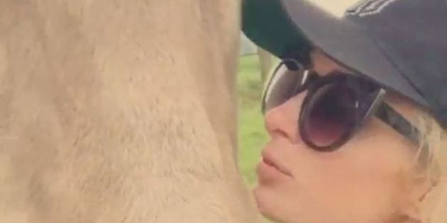 Paris Hilton prend la pose avec des vaches suisses