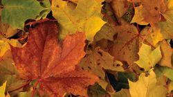 Pourquoi les feuilles d'automne prennent ces