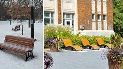 Le banc de parc de Montréal... pour les