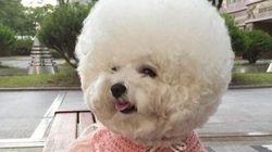 Ce chien a de plus beaux cheveux que