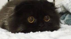 Ne vous perdez pas dans les yeux de ce chat