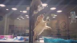 Un chaton s'échappe de son enclos pour aller jouer avec un chiot