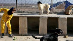 Iran: opération contre des chiens, symboles de «vulgaire culture
