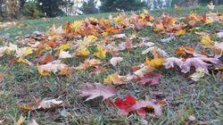 Quoi faire avec les feuilles mortes? Voici 3 solutions