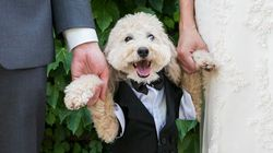 25 photos adorables de chiens assistant au mariage de leurs