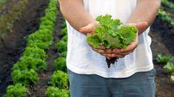 10 fruits et légumes à faire pousser facilement chez