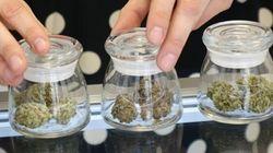 Marijuana: Des spécialistes de la santé publique prônent la