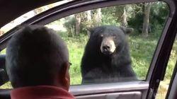 Cet ours terrifie une famille en ouvrant la porte de leur voiture