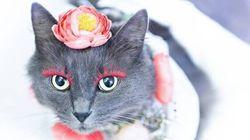 Ce chat avec des faux-cils est la vedette