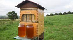 L'invention qui révolutionne l'apiculture et fascine les internautes