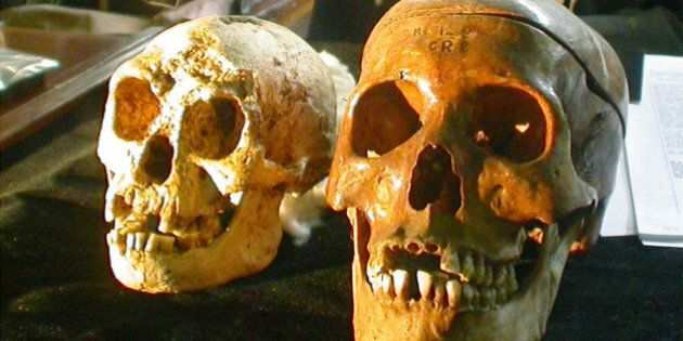 The skull, left, of a newly discovered 18,000-year-old species, known as Homo floresiensis, is displayed...