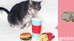 Sa chatte «obèse» imite le populaire