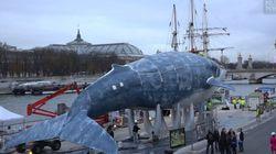 La plus grande baleine du monde fait escale près du Grand Palais de