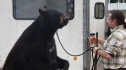 Un ours canadien «exhibé» dans un marché de Noël français fait