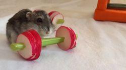 Ce hamster va vous donner envie de vous remettre au sport