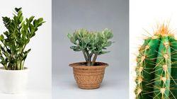 Ces plantes d'intérieur robustes que vous pouvez