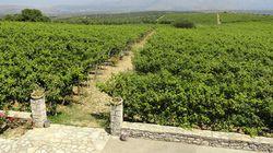 Carnets de voyage: les vins de Grèce du nord et du