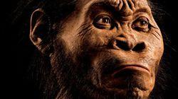 Une chercheure de l'UdeM découvre un ancêtre humain, «Homo naledi»