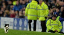 Un match de soccer en Angleterre interrompu par un intrus mignon