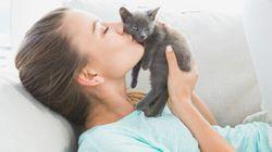 Votre chat vous aidera à vous remettre de votre