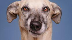 Ces chiens expressifs vous jugent, littéralement