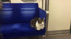 Ce chat prend le métro de Tokyo depuis trois